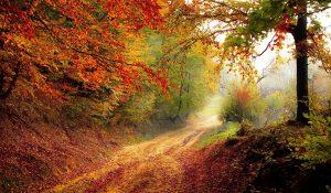 Foto: Herbstweg mit sehr intensiven Farben