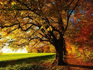 Foto: Waldweg am Wiesenrand in Herbstfarben