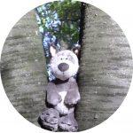 Foto: Stofftier-Wolf zwischen zwei Baumstämmen sitzend